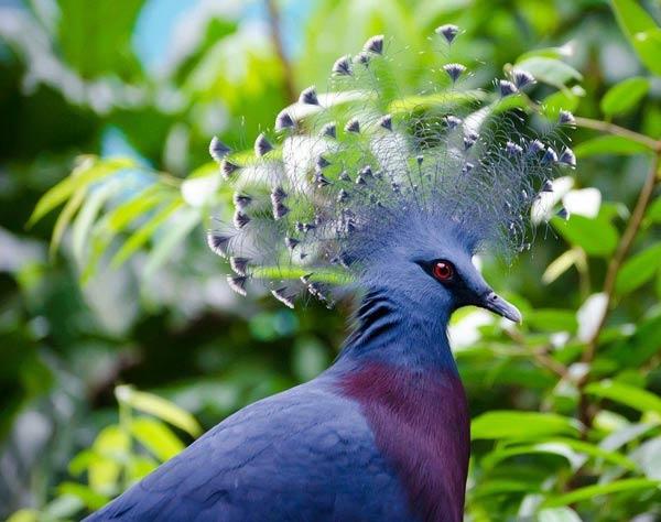 голуби тон от сахарного диабета